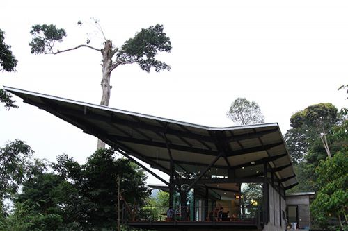 The 'Iron Leaf' in the Rainforest